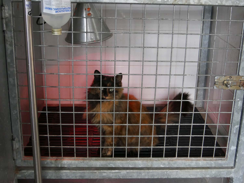 Hospitalisatie bij dierenarts