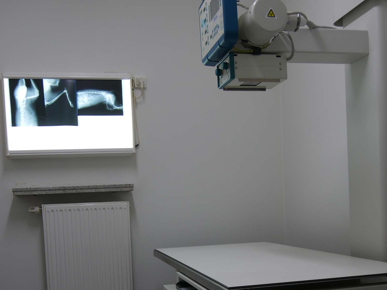 Radiologie dierenarts